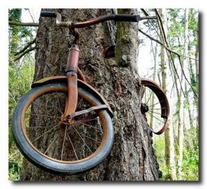 Симбиоз велосипеда и дерева